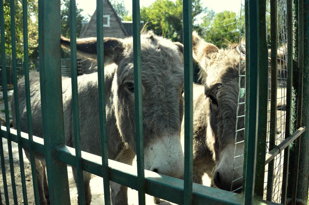 Сонні єноти та сумні віслюки: осінь у Луцькому зоопарку (фото)